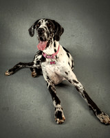 Barbie_Great_Danes-279-Edit