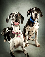 Barbie_Great_Danes-356-Edit